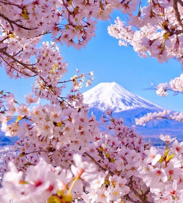 Amazing Places to See Cherry Blossoms in Japan!