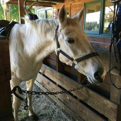 Mount Nicholas Farm Experience User Photo