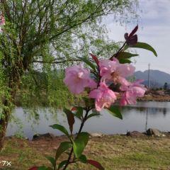 Silver City Flower Sea User Photo