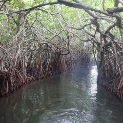 本托塔紅樹林用戶圖片