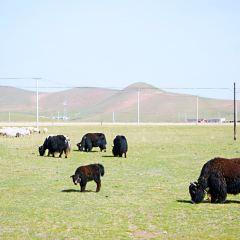 湖東種羊場用戶圖片
