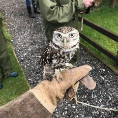 North East Falconry Centre User Photo