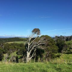 懷奧貝殼杉樹林用戶圖片