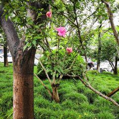 란저우 어린이 공원 여행 사진