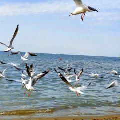 金沙灘旅遊度假區用戶圖片