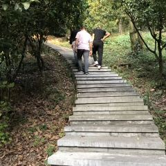 Chenzhou Nanling Botanical Garden User Photo