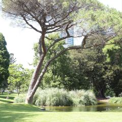 卡爾頓花園用戶圖片
