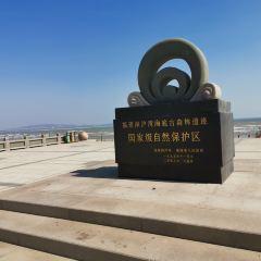 심호만해저 원시림 유적 자연보호구역 여행 사진