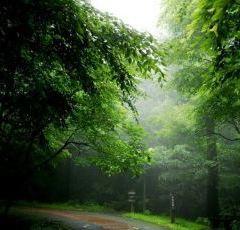 서귀포자연휴양림 여행 사진