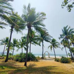 Coconut Dream Corridor User Photo