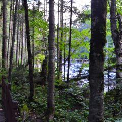 Valley Floor Forest User Photo