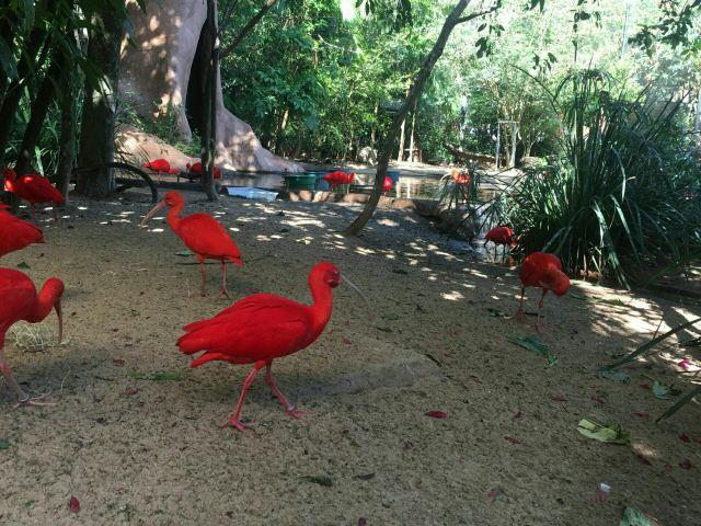 Birds Park