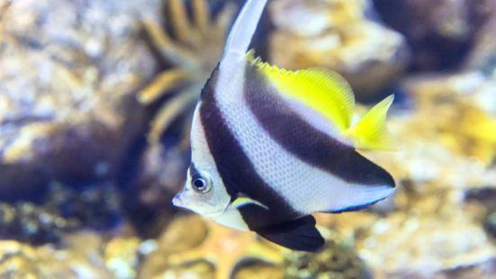 海底世界水族館