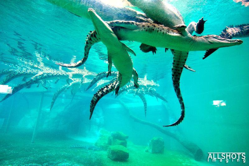 可哥洛思鱷魚灣主題公園