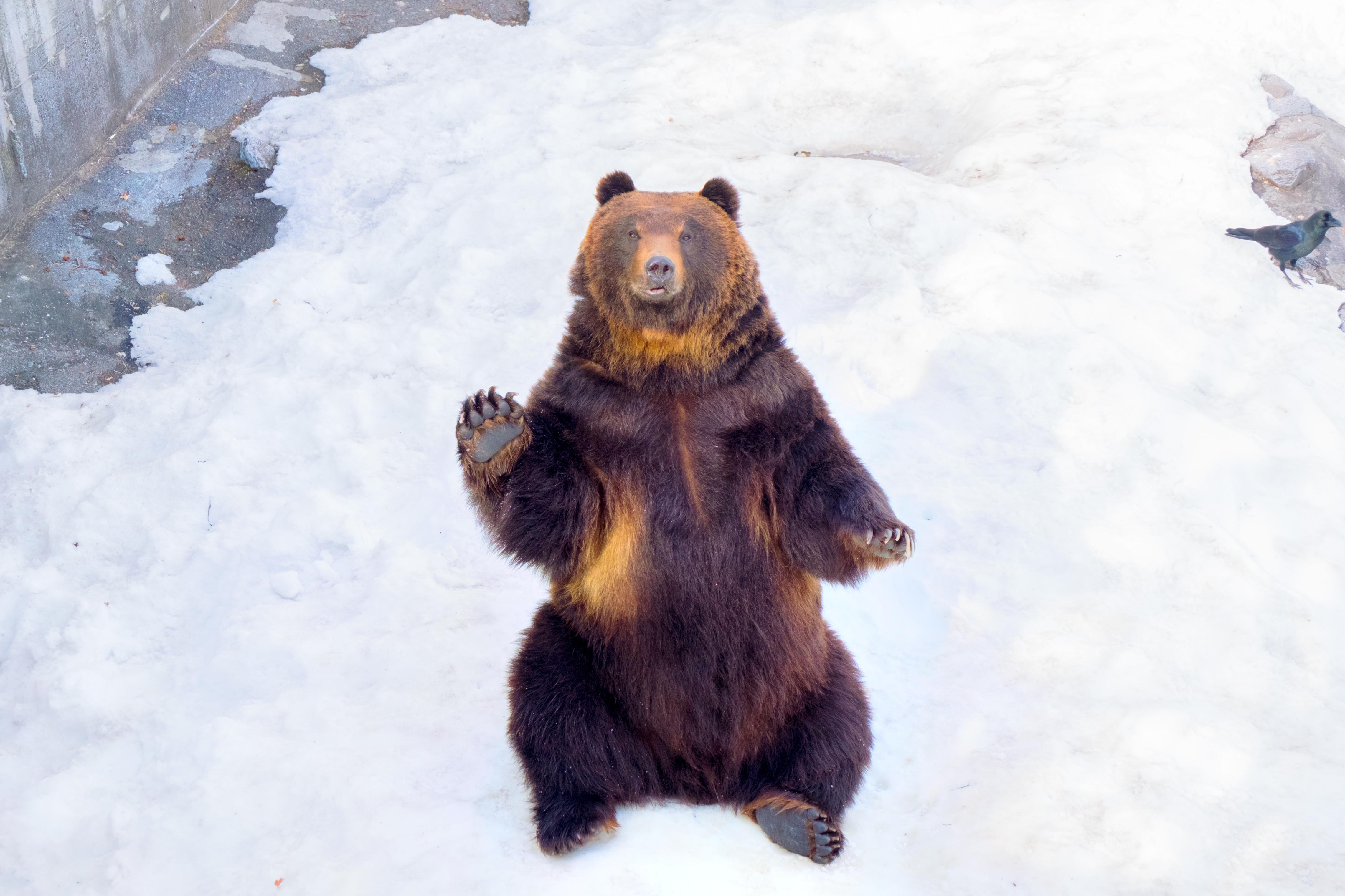 Noboribetsu Bear Park