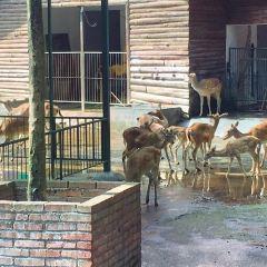 遵義動物園用戶圖片