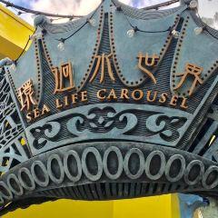 Sea Life Carousel User Photo