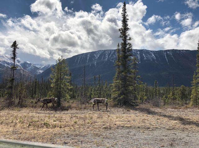 Muncho Lake Provincial Park