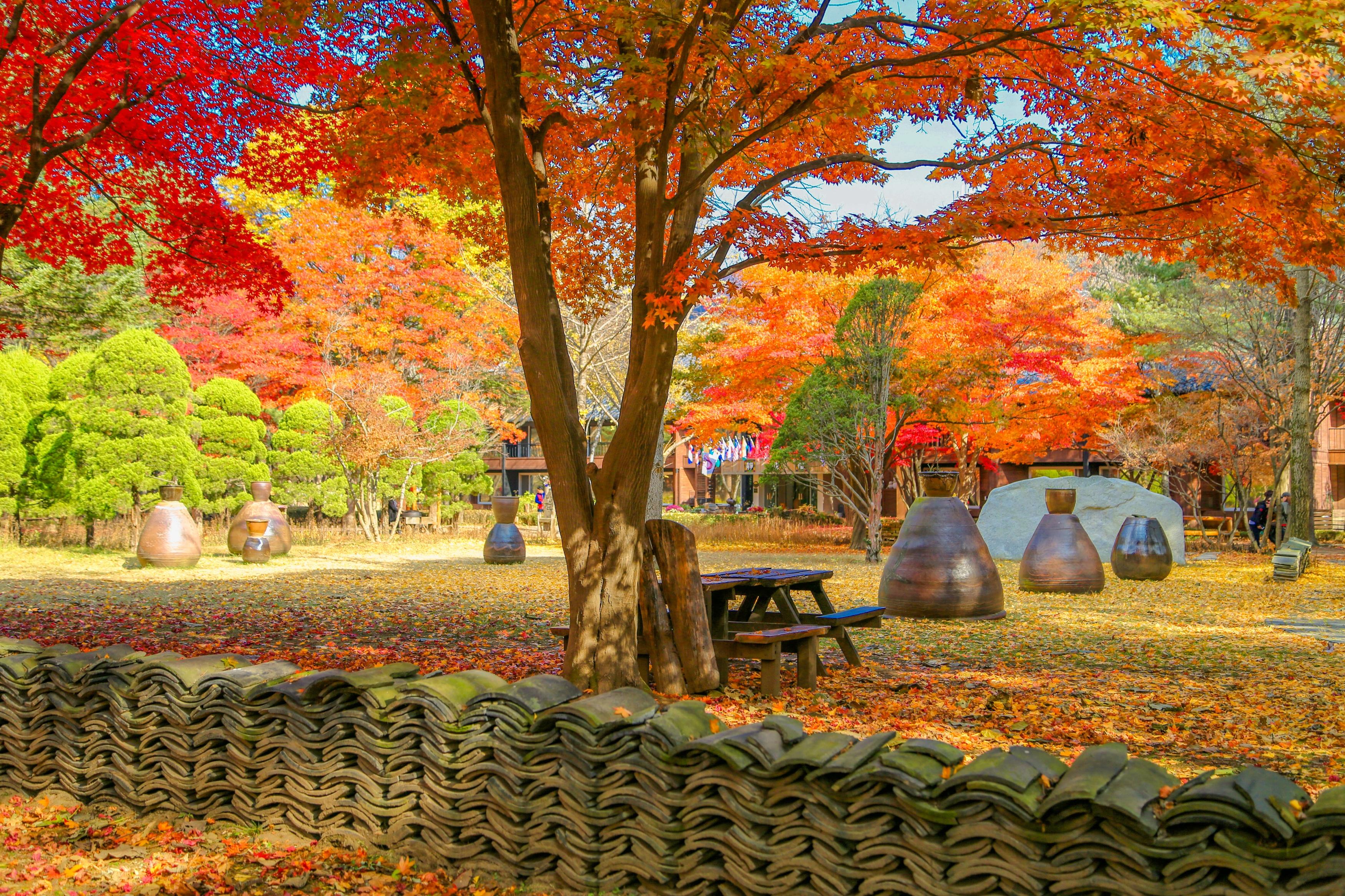 韓國春川市南怡島/晨安公園一日遊(首爾往返接送巴士含門票)