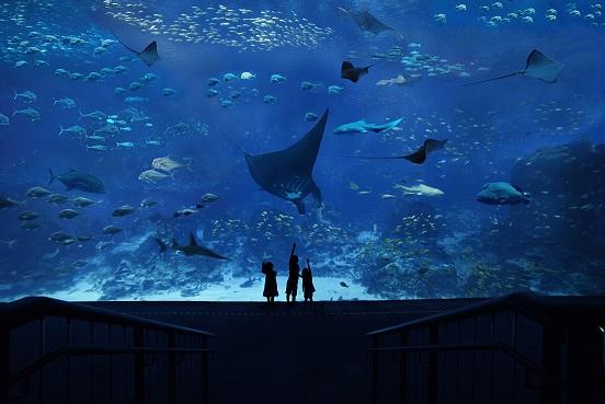 シー・アクアリウム(S.E.A. Aquarium)入場チケット