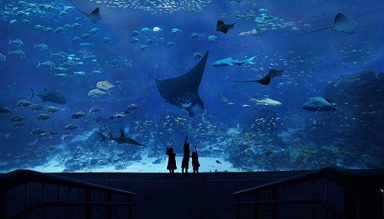 S.E.A. Aquarium™ One-Day Ticket