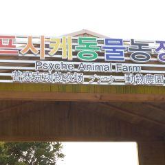 Theme Park Psyche World User Photo