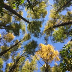 牡丹峰國家森林公園用戶圖片