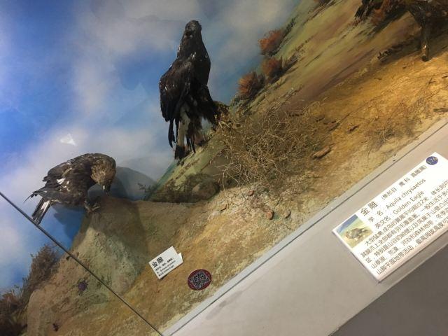 Qingdao Binhai University World Animal and Natural Ecology Museum