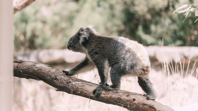 在南澳洲,置身神奇動物園,聽星星閃爍的聲音