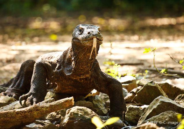 """科莫多國家公園:聽說印尼這個島上還有""""龍""""?"""