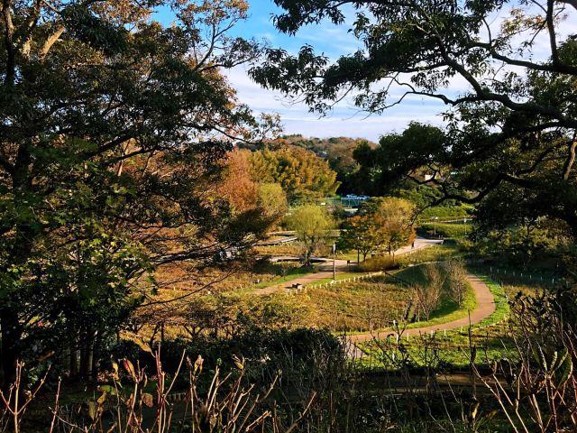 橫須賀市立しょうぶ園