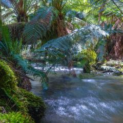 Narawntapu National Park User Photo