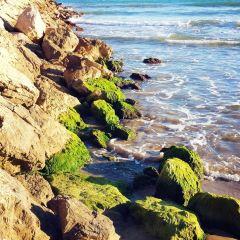 錫切斯海灘用戶圖片