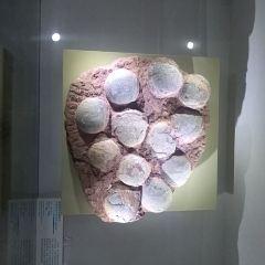 Dapeng Geopark Museum User Photo