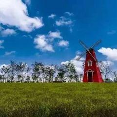 上海國際旅遊度假區香草園用戶圖片