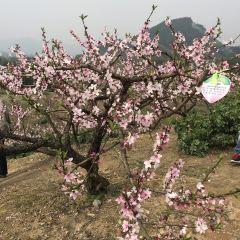 Tianxiadiyi Peach Orchard User Photo