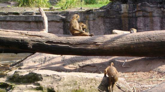 Nuremberg Zoo (Tiergarten)