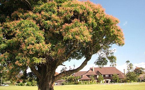 Kilohana Plantation Estate