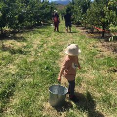 Kempf Orchards User Photo