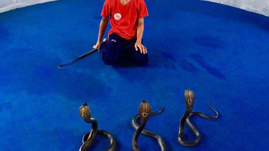Ao Nang Snake Show