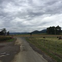 Ashgrove Tasmanian Farm Cheese User Photo