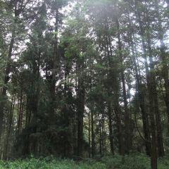 Alishan Scenic Area User Photo