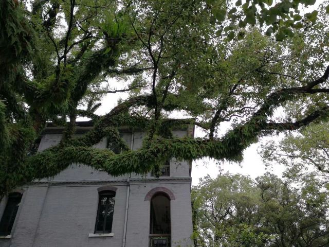 Zhuziqing Jiuju