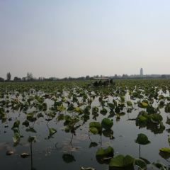 Weishan Lake Thousand Island Wetlands User Photo