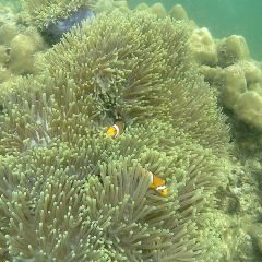 Payar Island User Photo