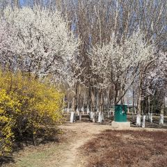 遼河七星濕地公園用戶圖片