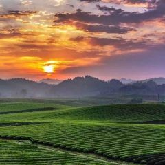 中國茶海景區用戶圖片