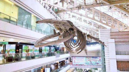 Zhengjia Natural Science Museum