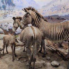 卡塞爾自然歷史博物館用戶圖片