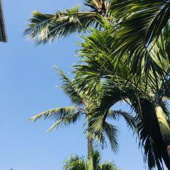 Coco Veranda User Photo